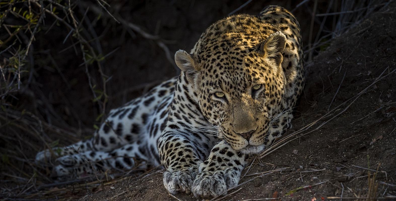 Wildlife 9